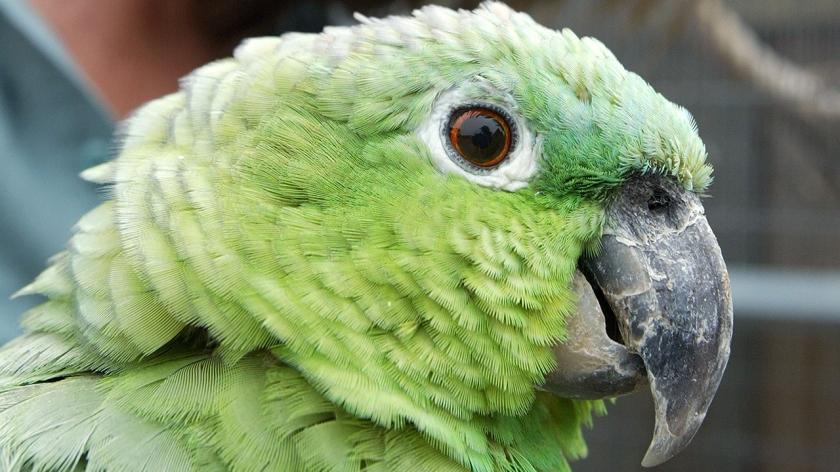 drug parrot_1556304571862.jpg_7175918_ver1.0_1280_720