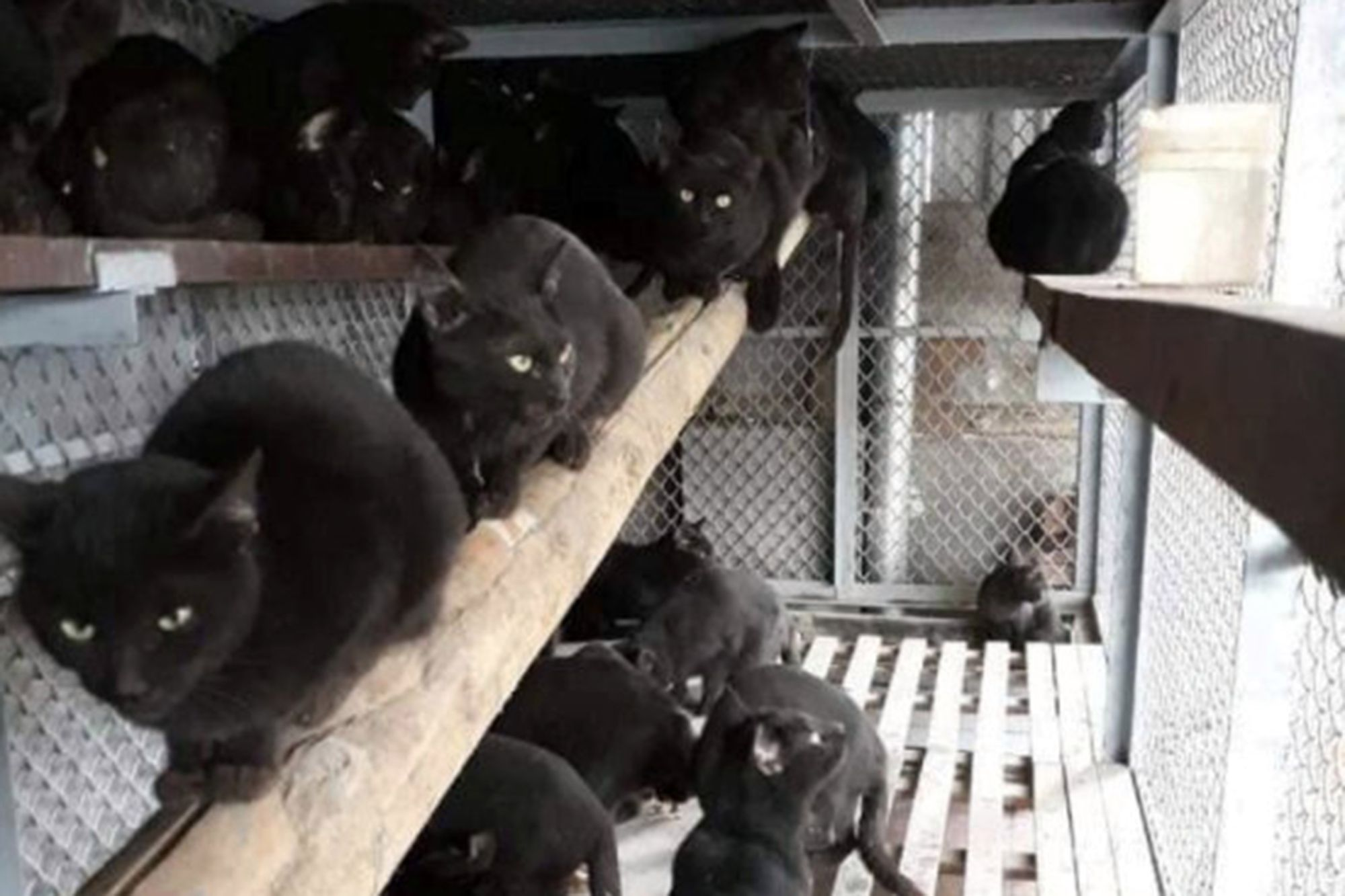 black-cats-35